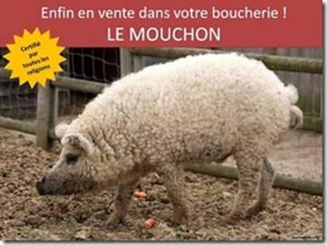 Vox Populi - Page 12 Mouchon